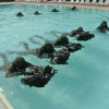 Force Recon Course 2015_025